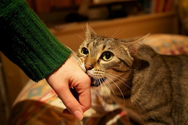 mo thay meo 2 - Nằm mơ thấy mèo là điểm tốt hay xấu? Đánh con gì?