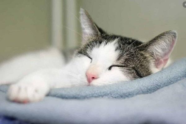 mo thay meo 3 - Nằm mơ thấy mèo là điểm tốt hay xấu? Đánh con gì?