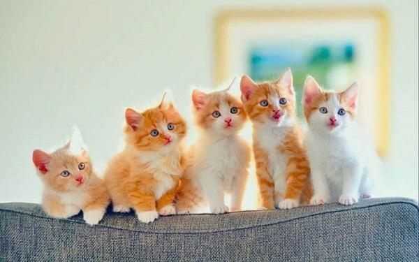 mo thay meo 4 - Nằm mơ thấy mèo là điểm tốt hay xấu? Đánh con gì?