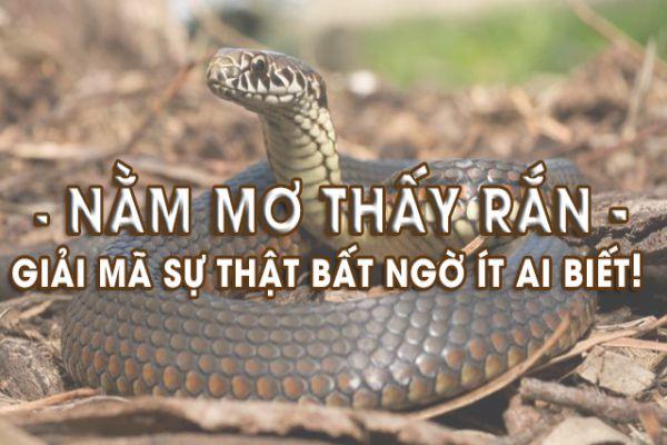 mo thay ran 1 - Nằm mơ thấy rắn là điềm báo gì? Đánh con gì?