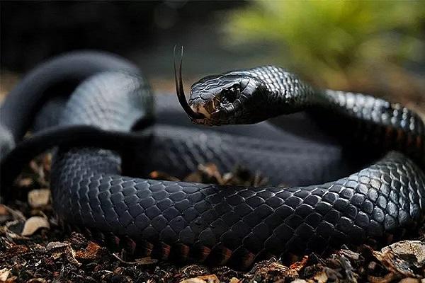 mo thay ran 2 - Nằm mơ thấy rắn là điềm báo gì? Đánh con gì?