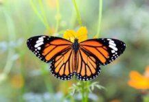mo thay buom 2 218x150 - Nằm mơ thấy bướm là điềm báo gì? Đánh con gì?