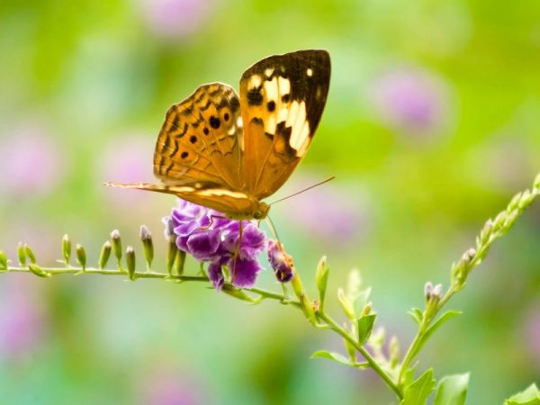 mo thay buom 5 - Nằm mơ thấy bướm là điềm báo gì? Đánh con gì?